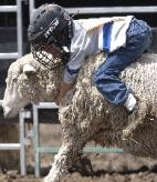 Mutton Bustin' at the Rodeo